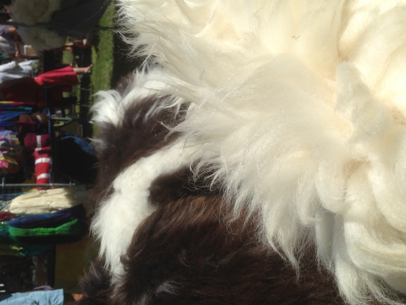 zaak 1313368 - wolfestival orvelte-gevilte vachten